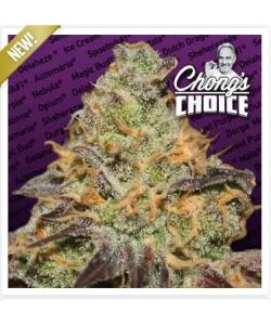Paradise Seeds - Blue Kush Berry Chong's Choice - 5 Semi Femm