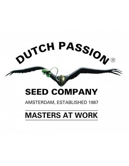 Dutch Passion Femm